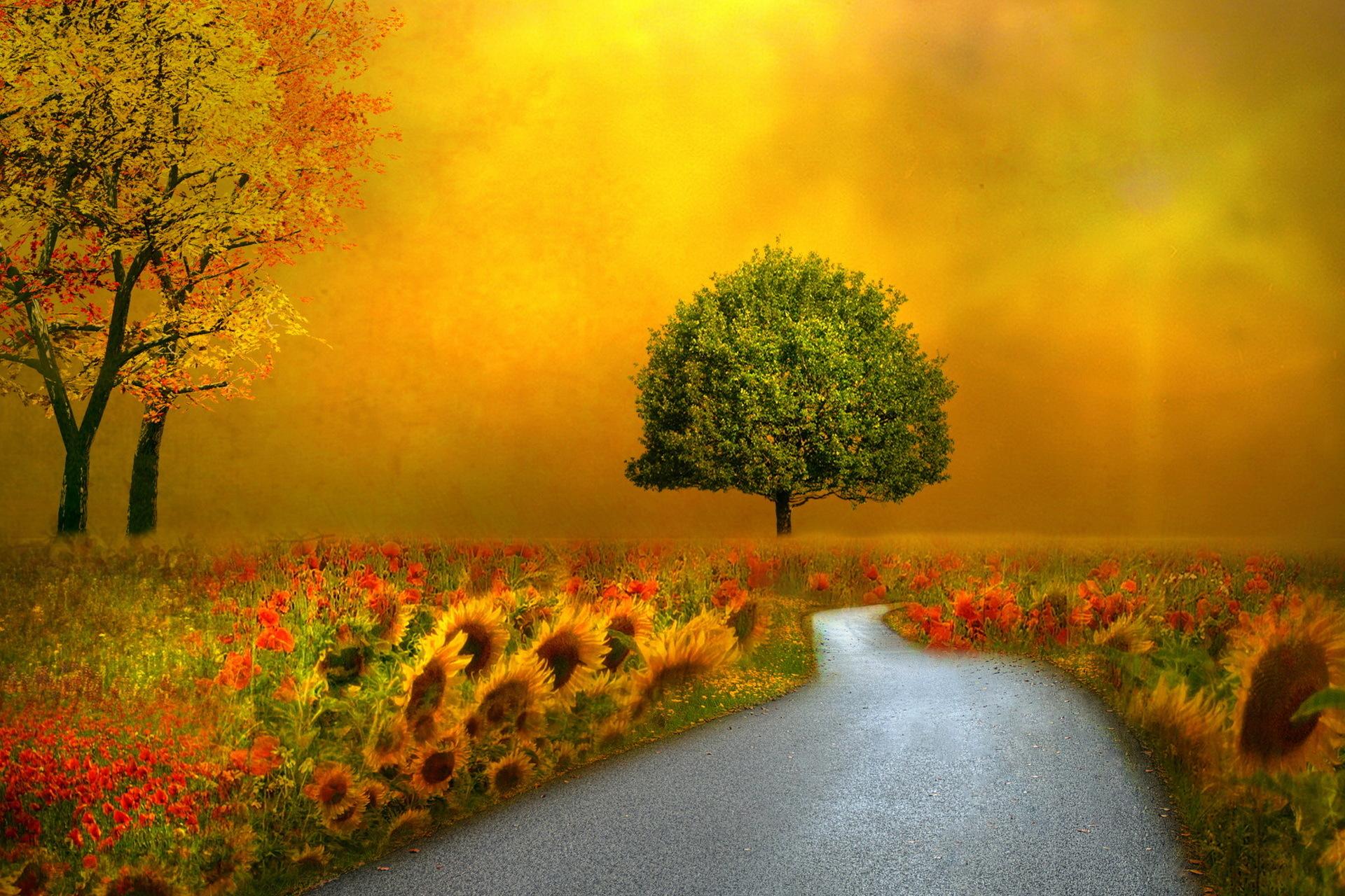 nature autumn fall seasons flowers roads pathways wallpaper background
