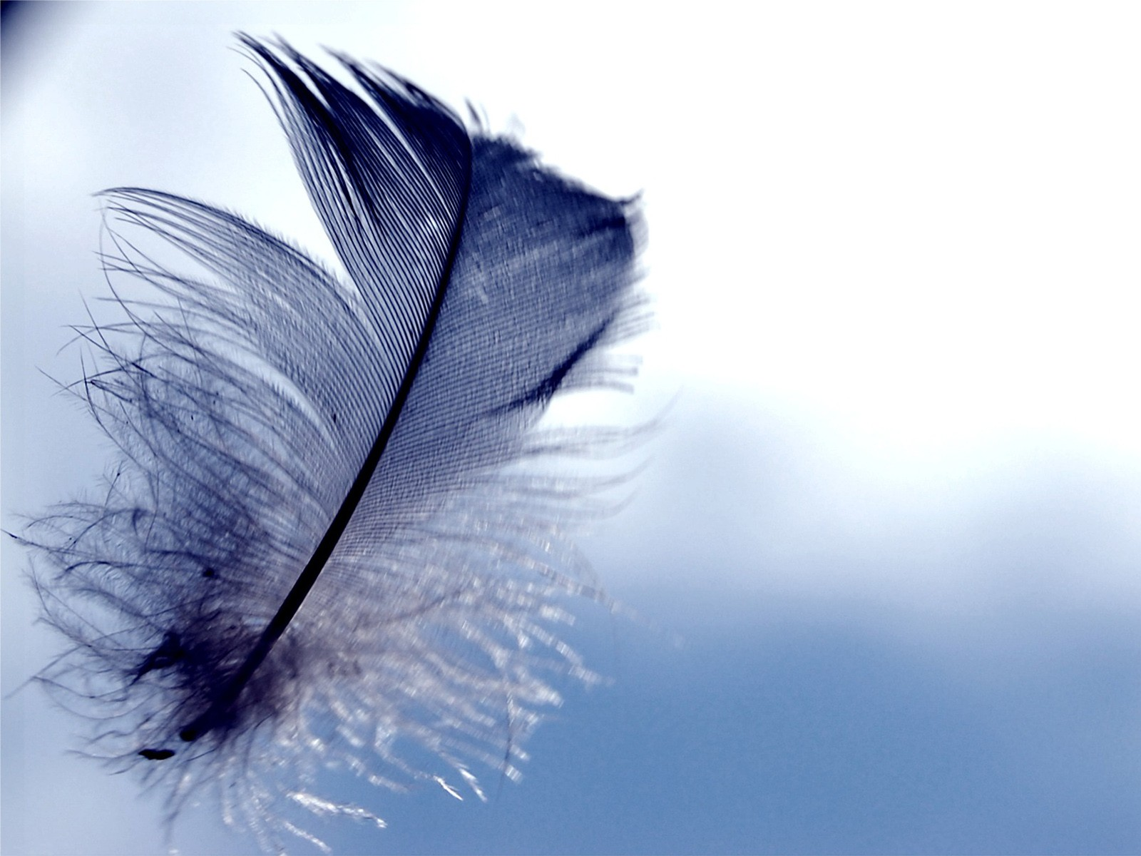 Feather wallpapers hd 1600x1200
