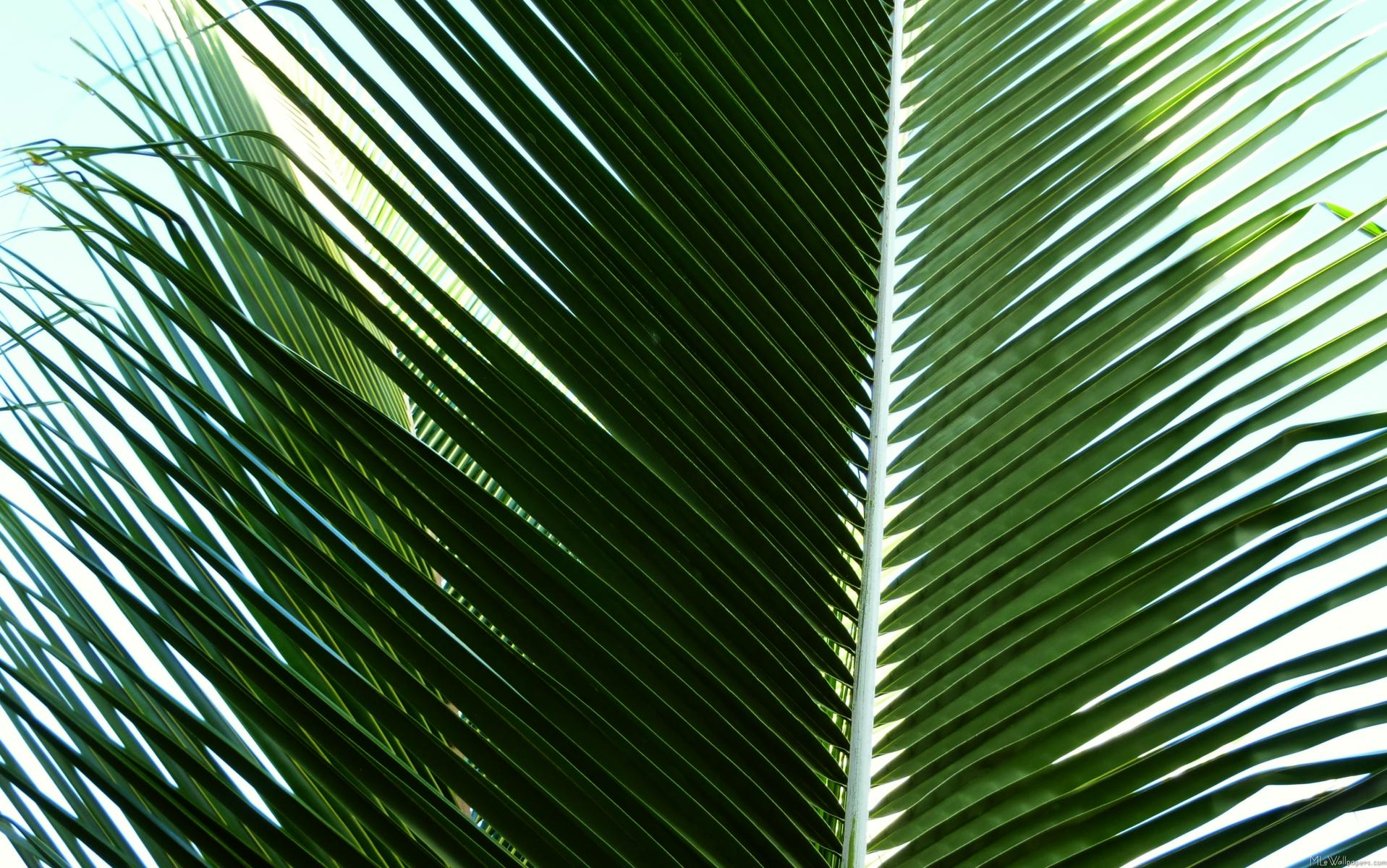 MLeWallpaperscom   Overlapping Palm Fronds 1917x1200