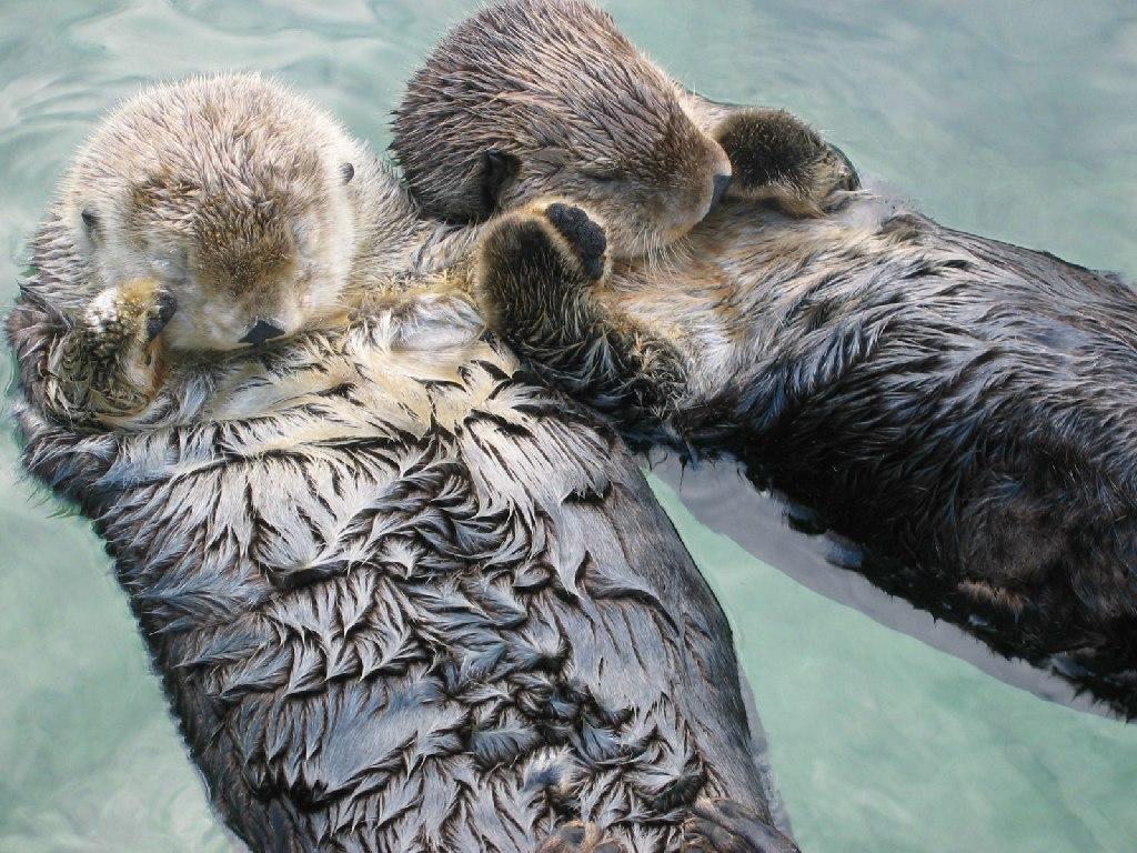 Funny Otter wallpaper Funny Animal 1024x768