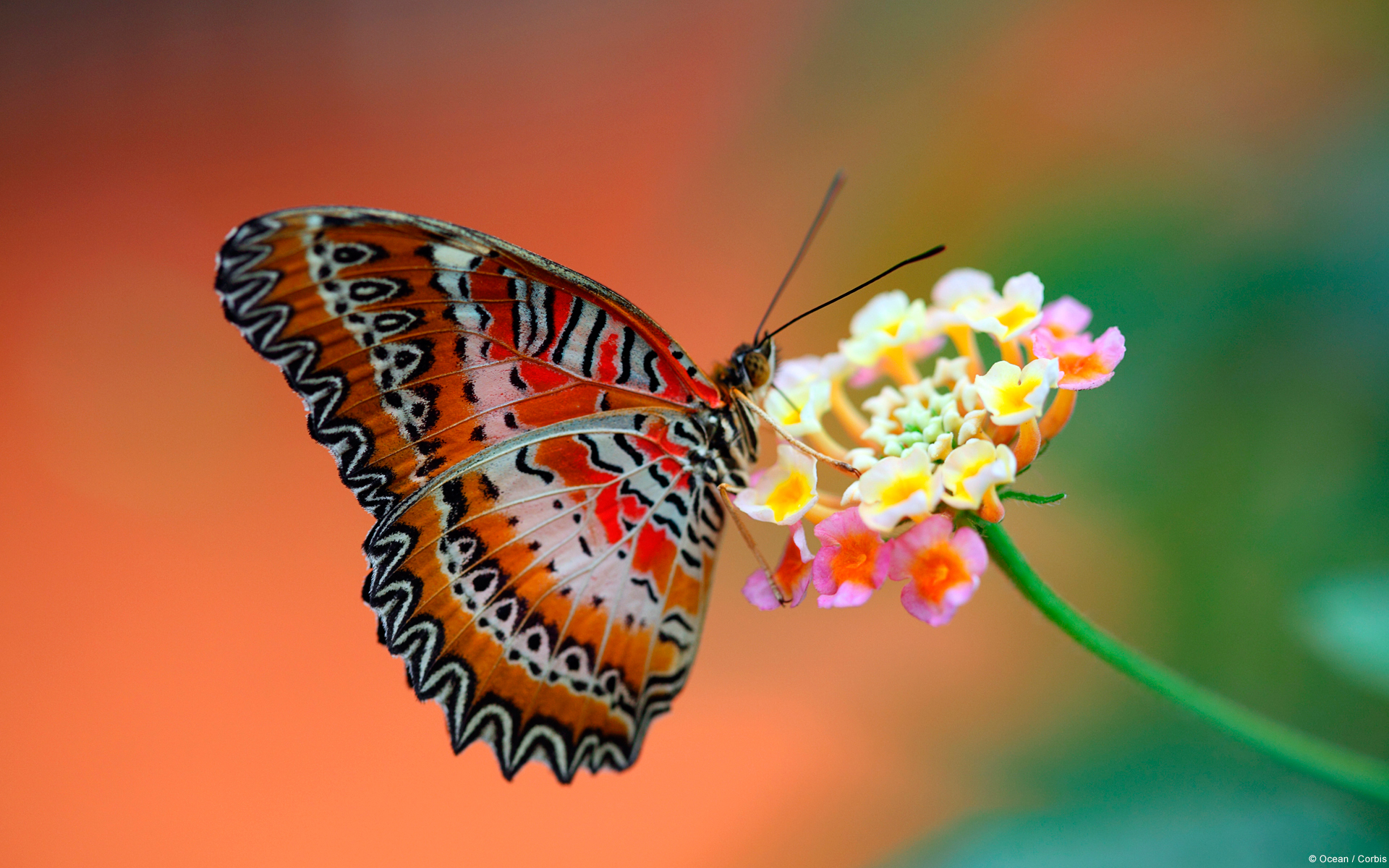 Butterfly on Flower Wallpapers HD Wallpapers 1920x1200