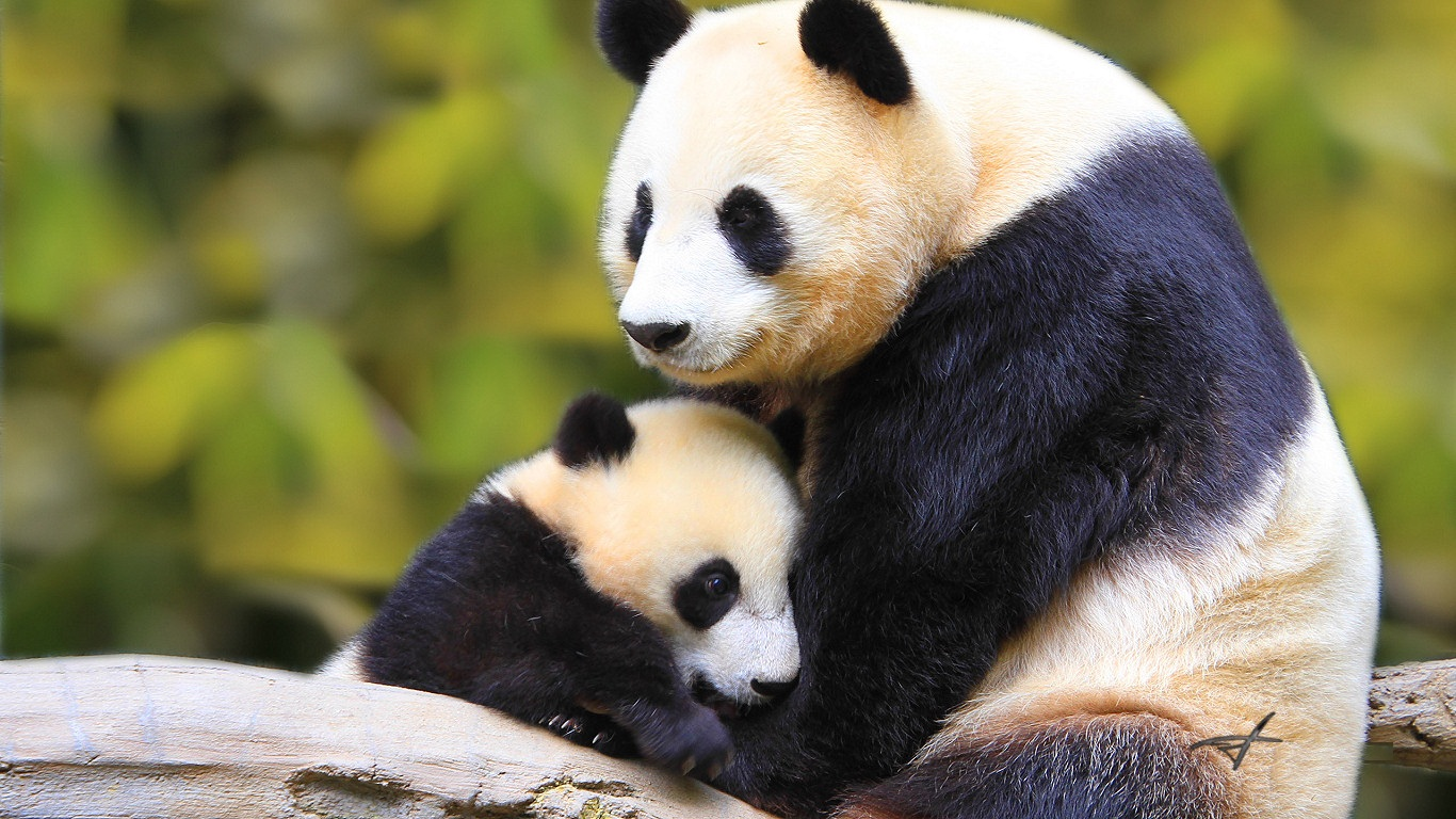 Cute Baby Animal Wallpapers: Cute Baby Animal Wallpapers Free