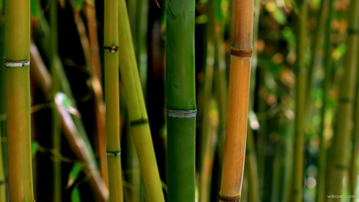 how to get rid of japanese bamboo