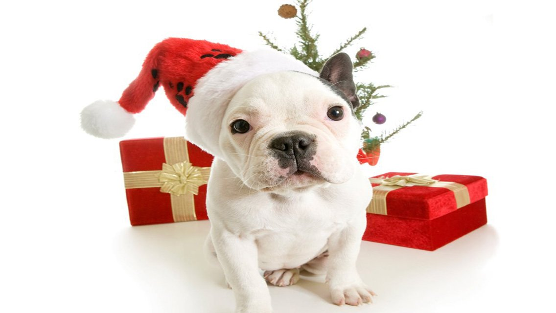 Christmas Puppy   Download Christmas Dog HD Wallpapers for iPhone 1136x640