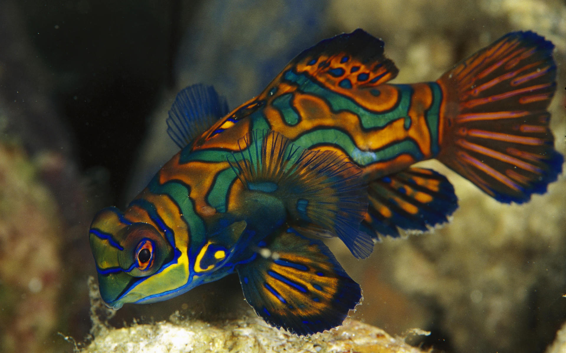 background colorful fish underwater wallpaper wallpapers 1920x1200 1920x1200