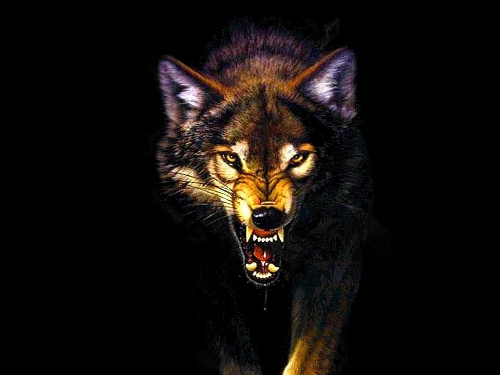Hd wallpaper wolf - Wolf Wallpaper Desktop 11088 Hd Wallpapers In Animals Imagesci Com