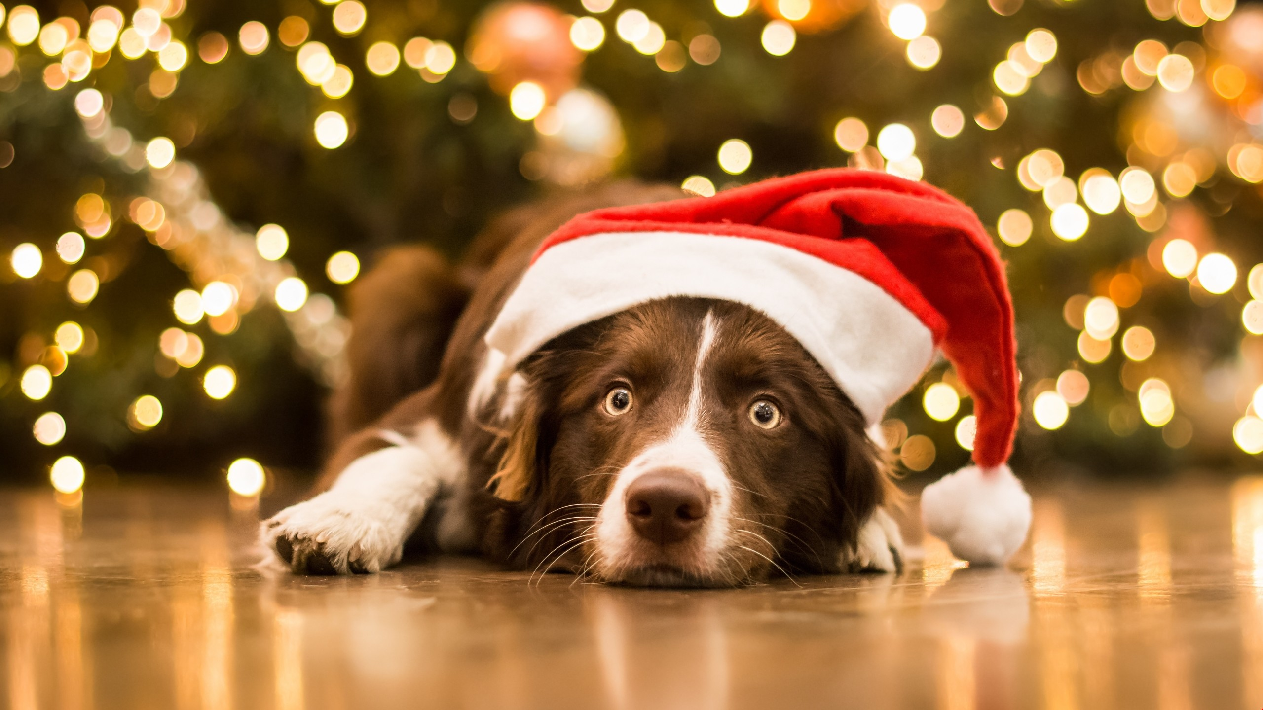 64 Christmas Animal Wallpapers on WallpaperPlay 2560x1440