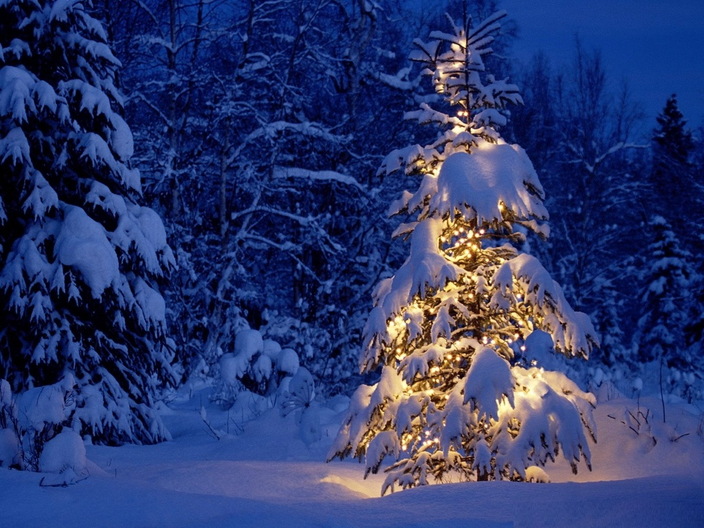 Wallpapers 3d Christmas Tree Backgrounds Desktop Wallpapers 1024x768