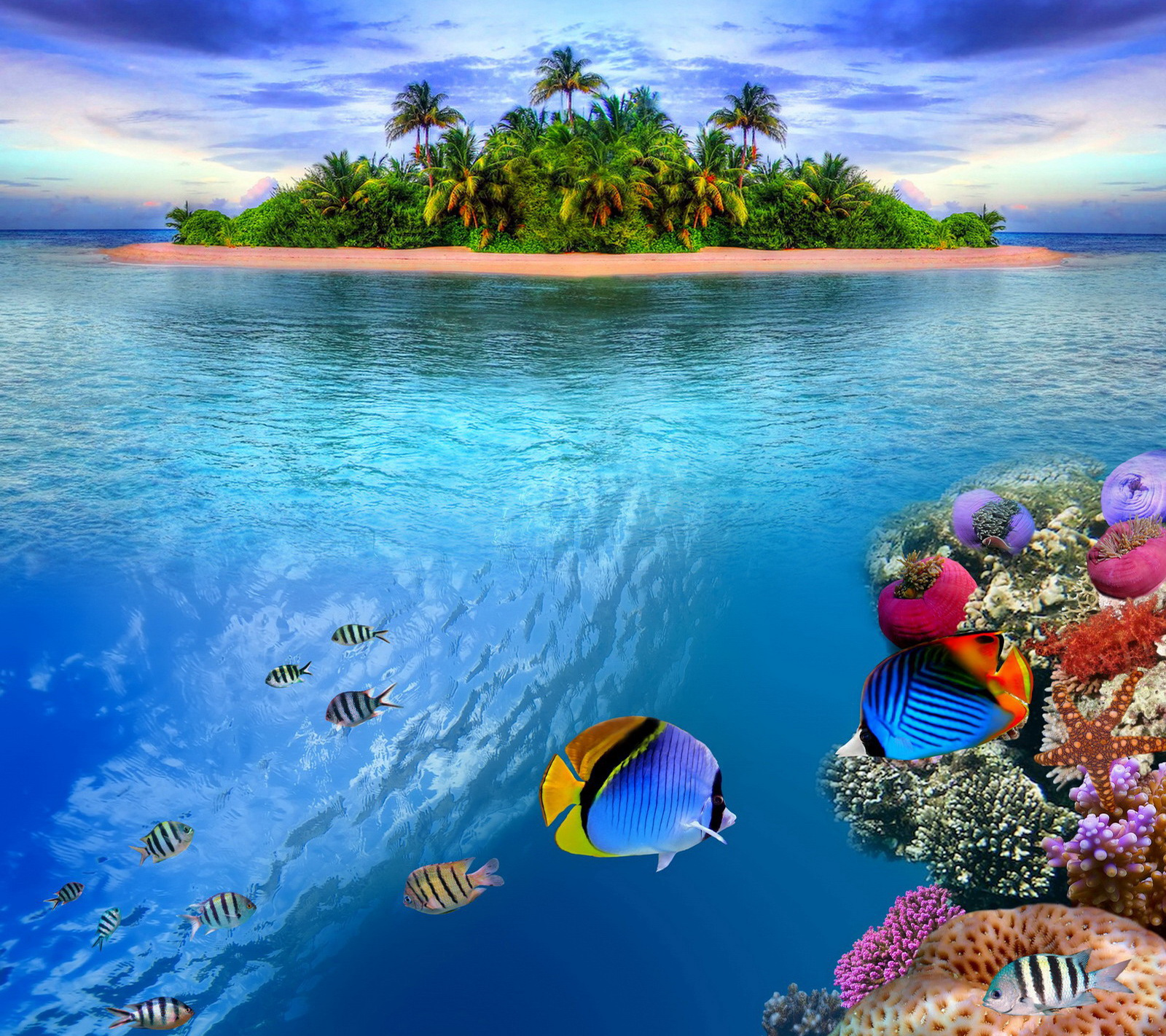 Coral Reef Wallpaper   SA Wallpapers 1600x1422