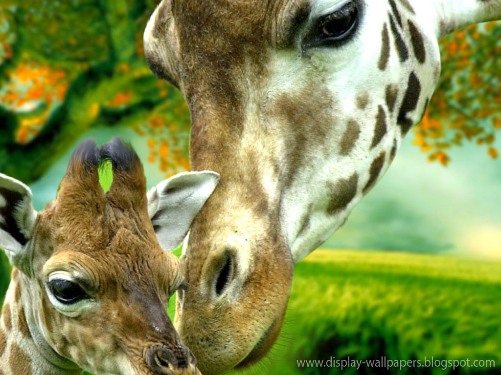Animation Wall Cute Animals Wallpaper Download 1024x768