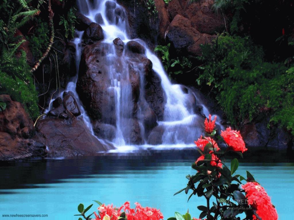 Monkey Blog waterfall wallpaper hd 1024x768