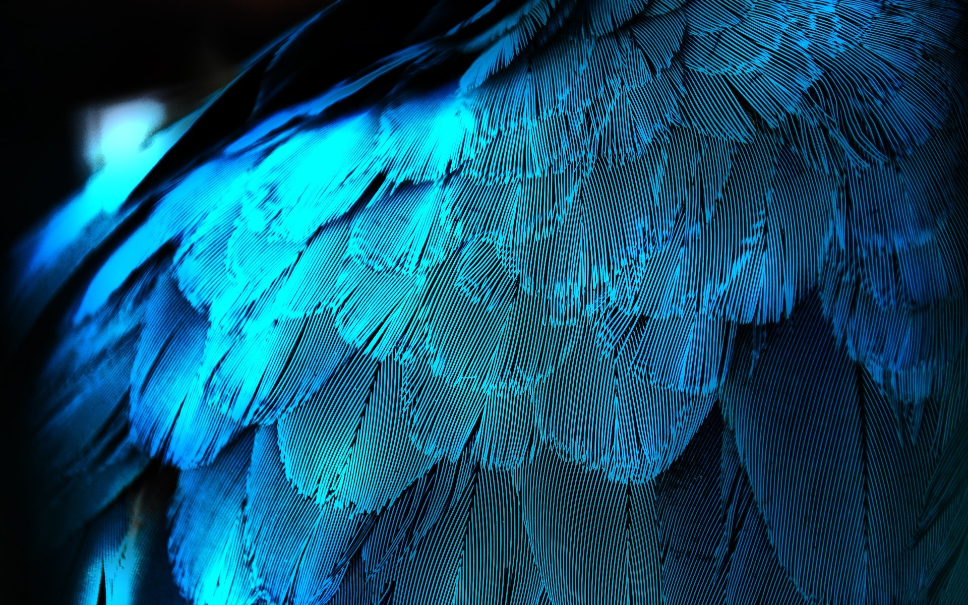 Electric Blue Feathers wallpapers Electric Blue Feathers stock 1920x1200