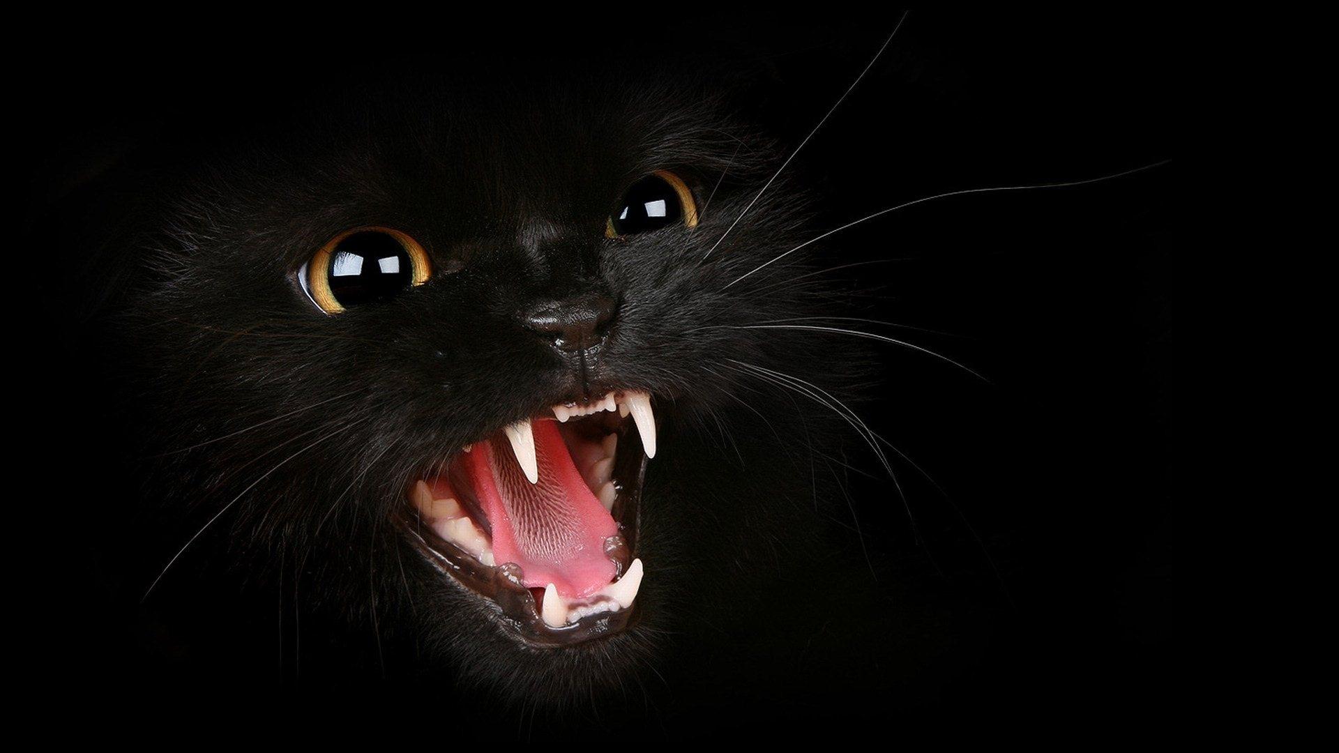 48 black cat screensavers and wallpaper on wallpapersafari - Black screensaver ...