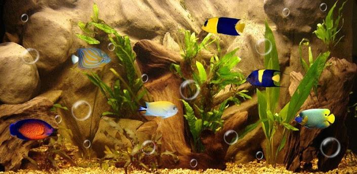 Fish Aquarium Live Wallpaper 705x345