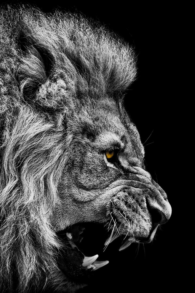 Angry black and white wallpaper Black and white desktop wallpapers 640x960