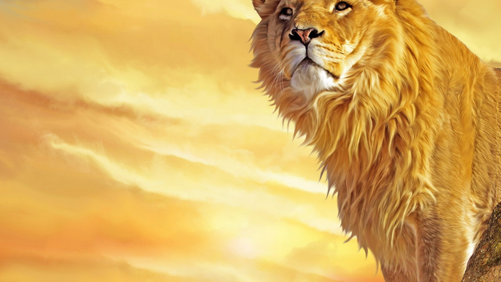 white lion wallpaper HD 1920x1080