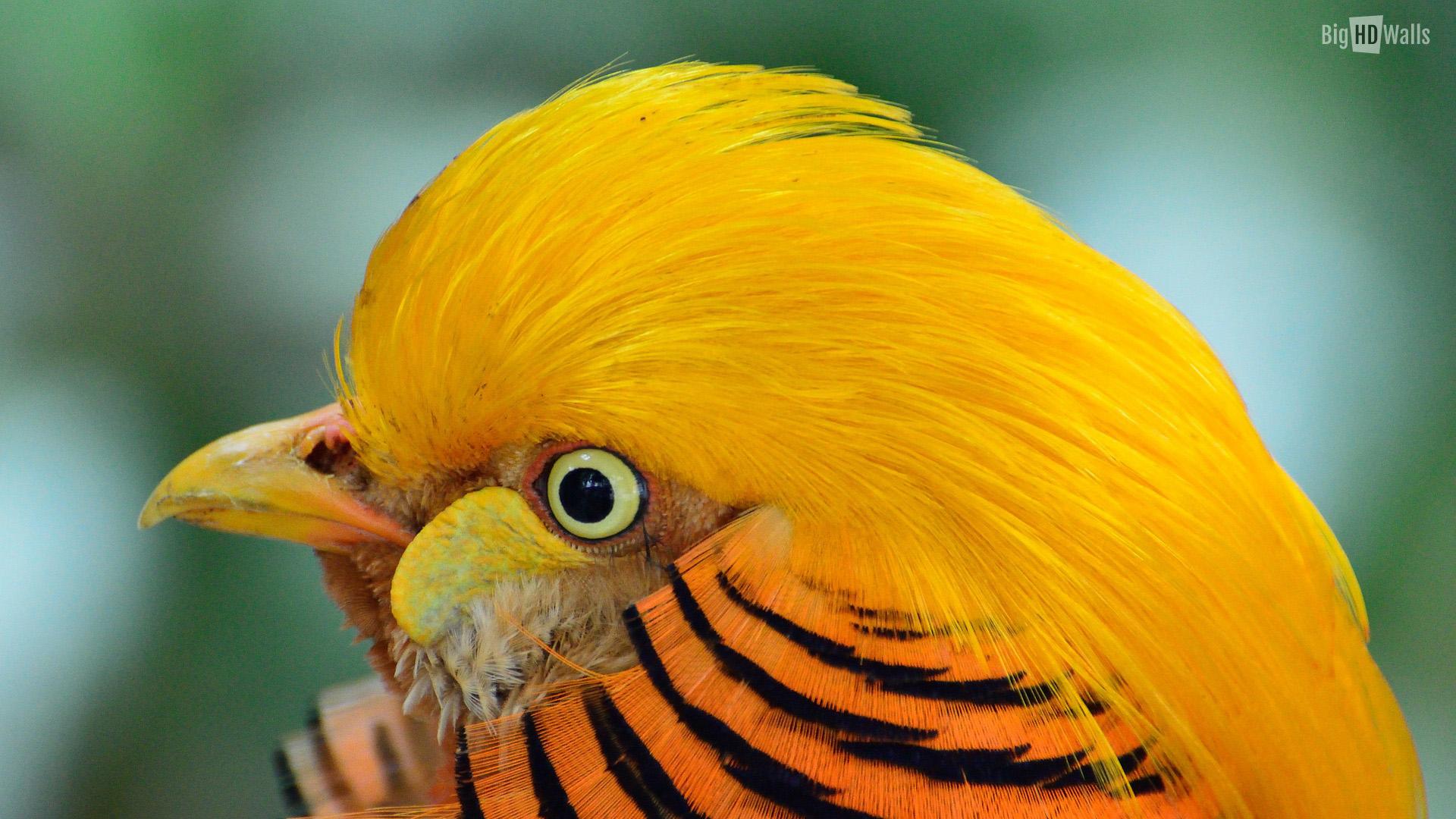 [50+] Beautiful Exotic Birds Photos Wallpaper on ...