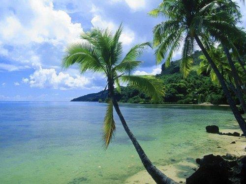 free tropical palm tree wallpapers enjoy tropical palm tree wallpapers 500x375