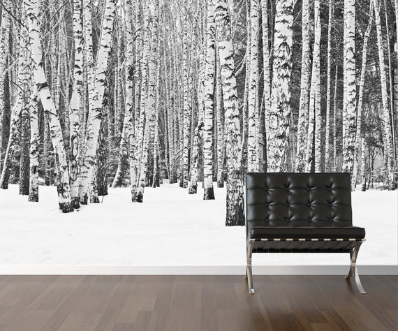 Birch tree wallpaper repositionable peel stick wall paper wall 570x474