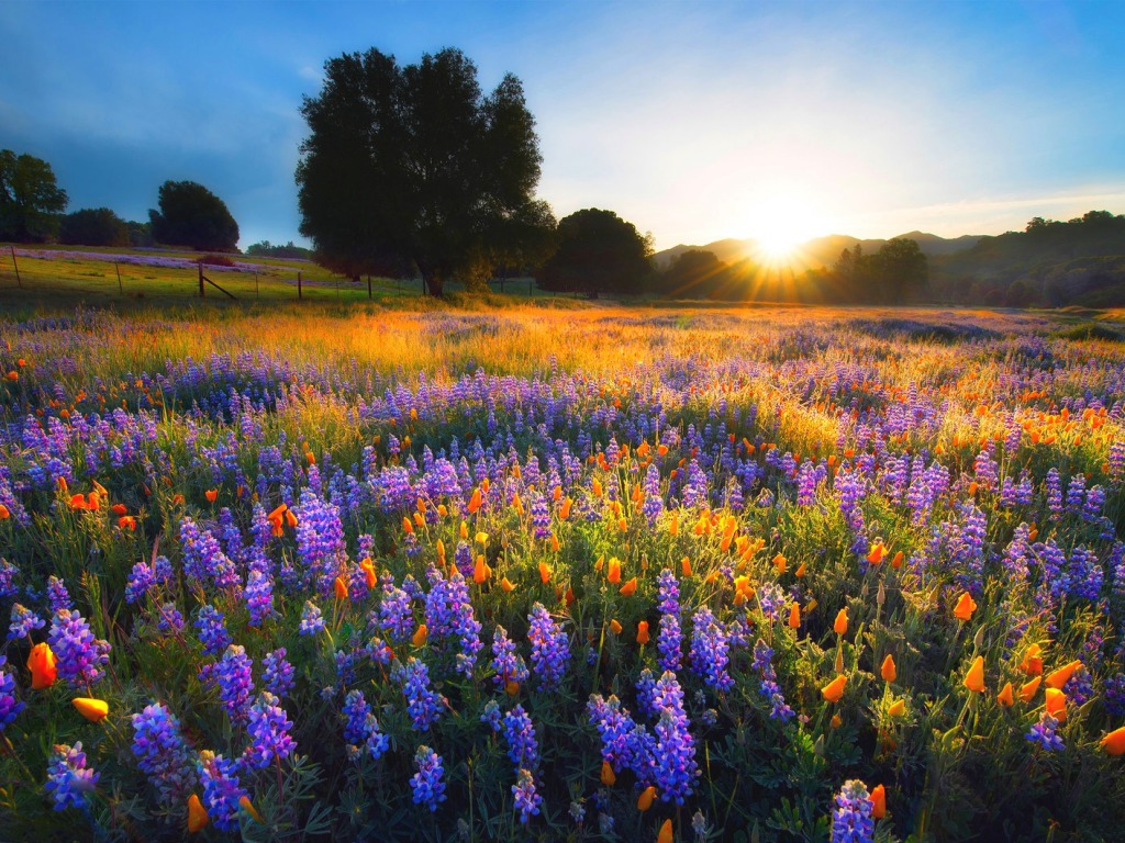 Sunset in Spring One HD Wallpaper Pictures Backgrounds FREE Download 1024x768