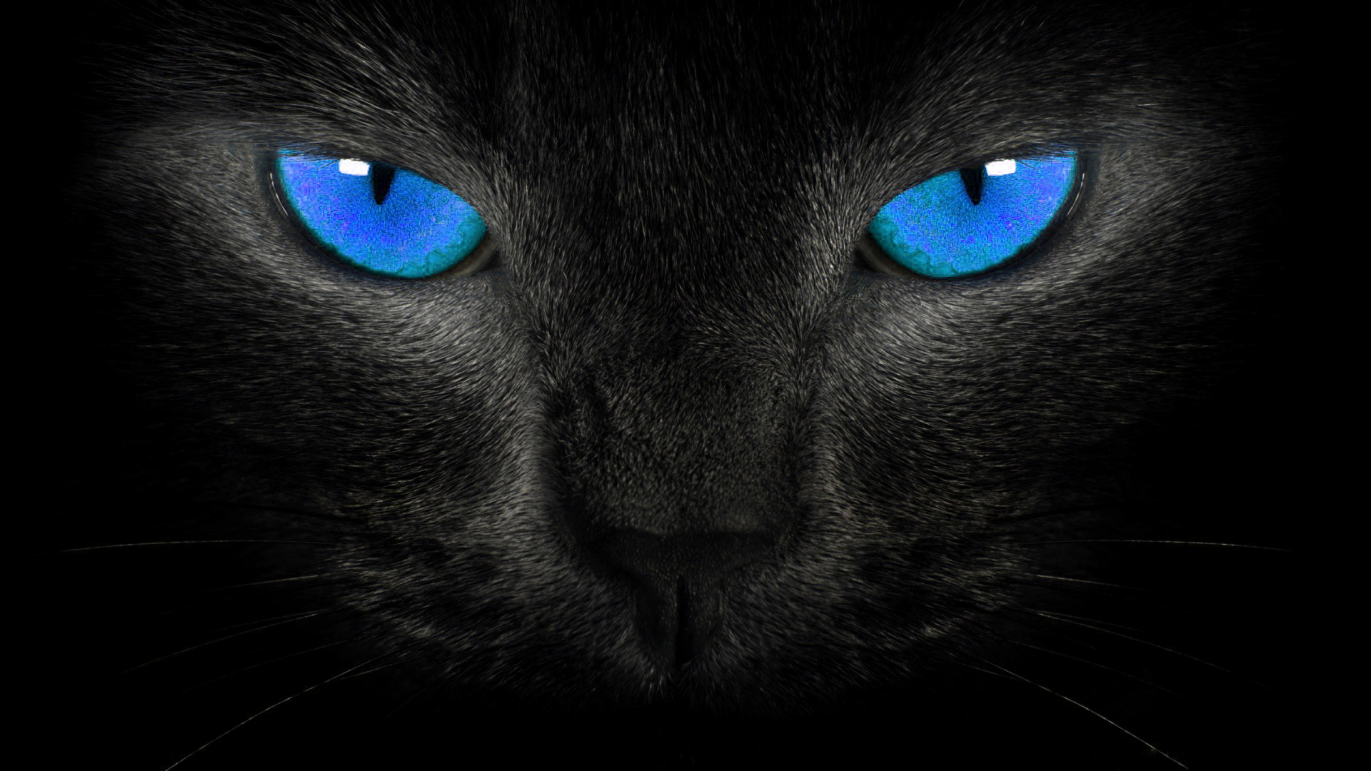 black cat blue eyes wallpaper hd widescreen wallpapers animals photo 1920x1080
