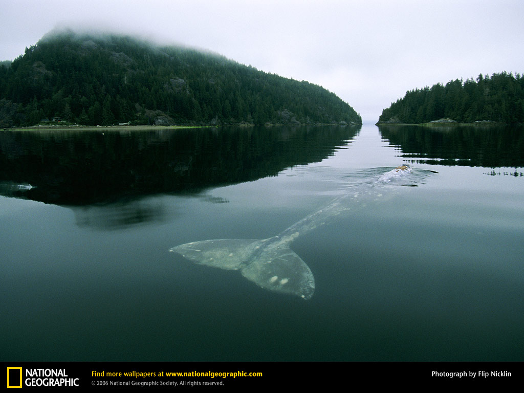 Whale Picture Whale Desktop Wallpaper Wallpapers Download 1024x768