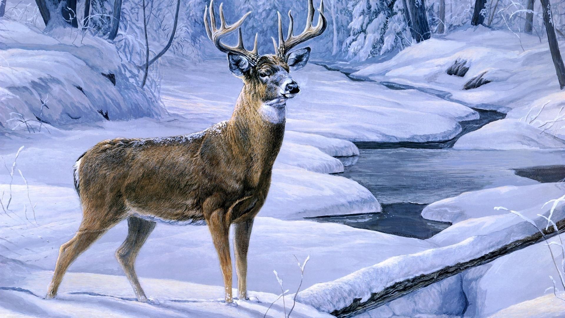 Deer Scene Wallpaper Wallpapersafari