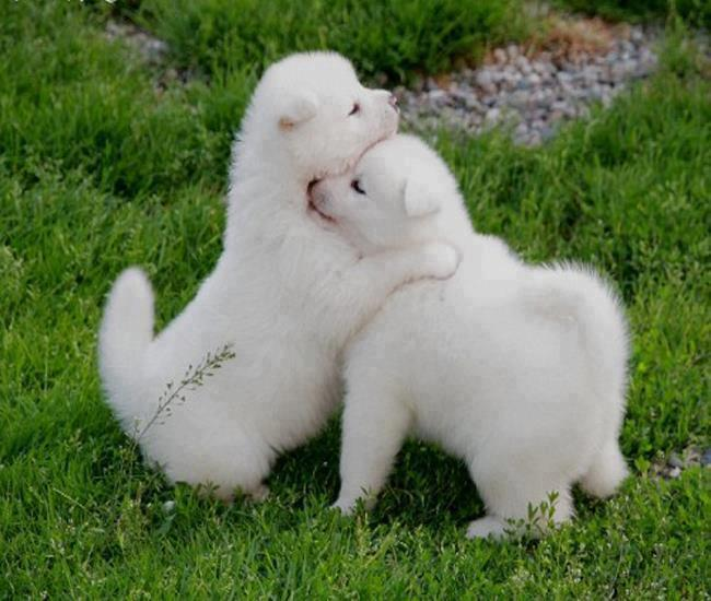 Beautiful Wallpapers For Desktop Beautiful HD puppies Dogs wallpapers 650x550