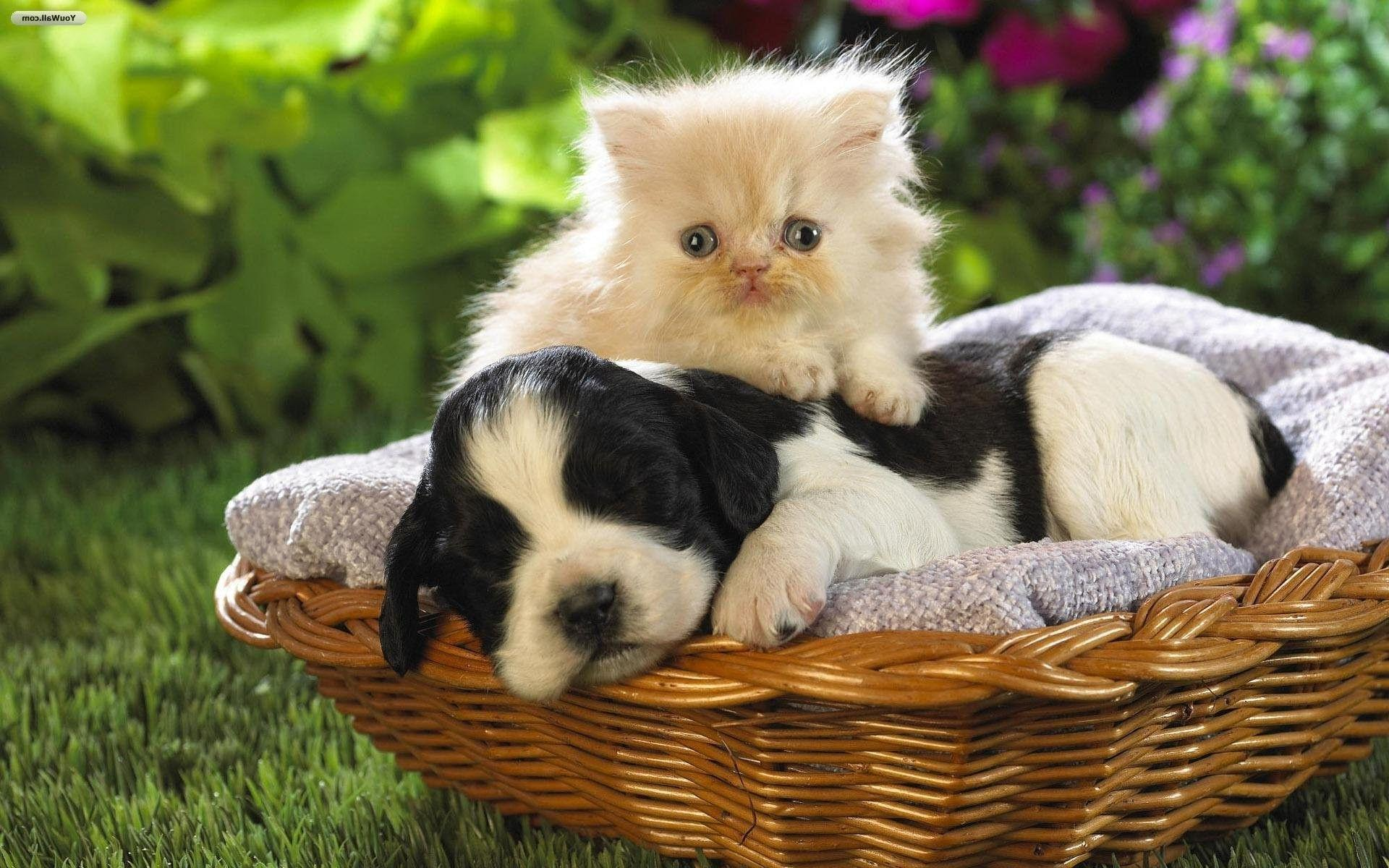 Cats And Dogs Wallpapers 1920x1200