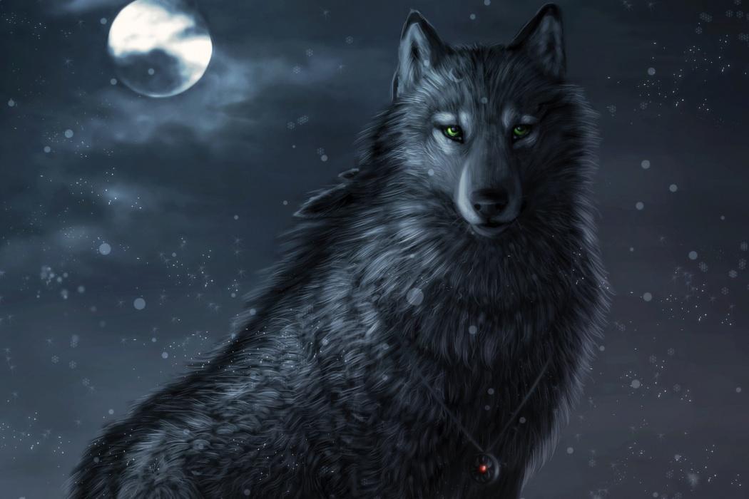 HD Wolf Wallpapers 1080p - WallpaperSafari