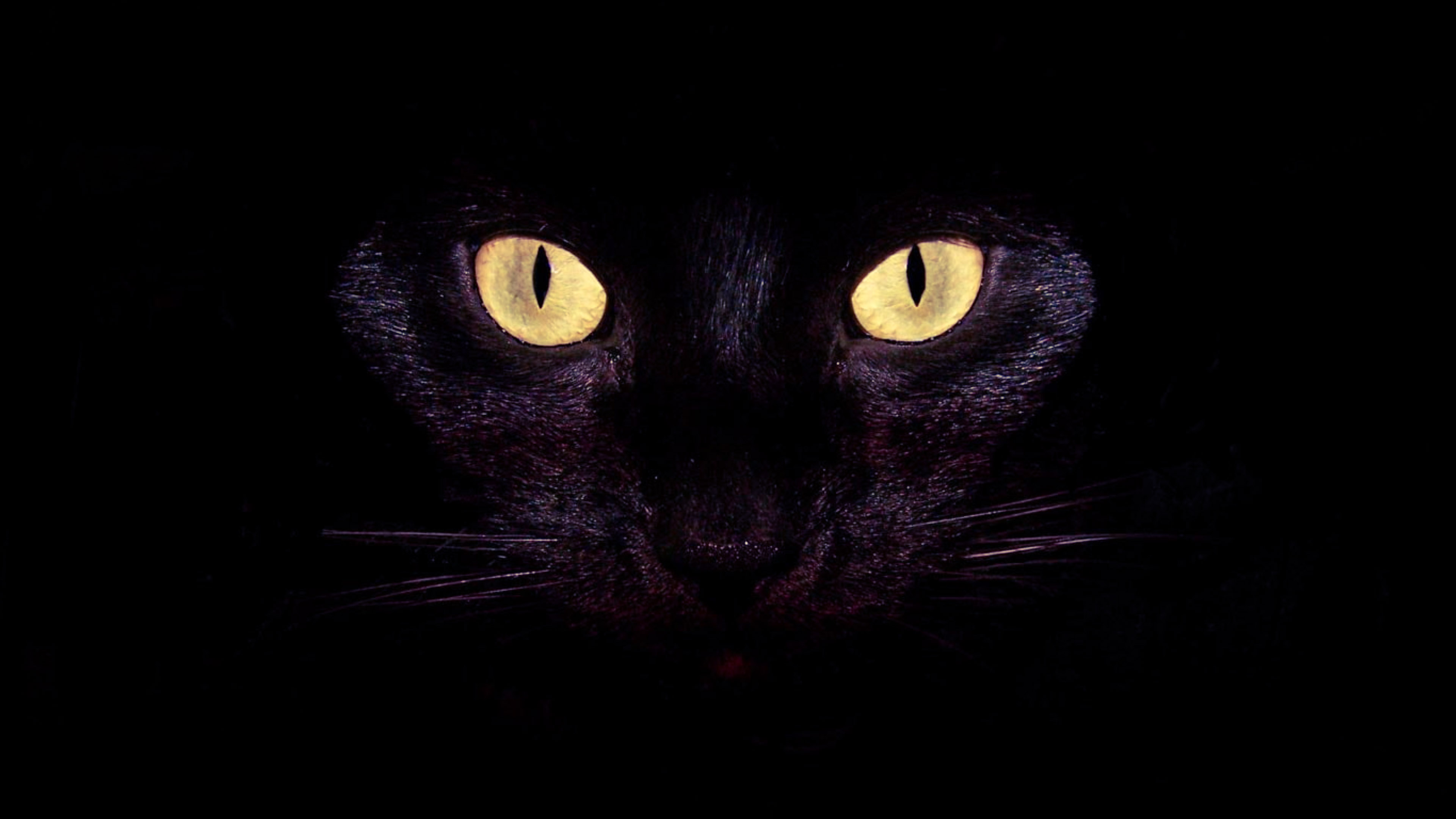 Cool Cat Eyes Wallpaper 2021 3840x2160