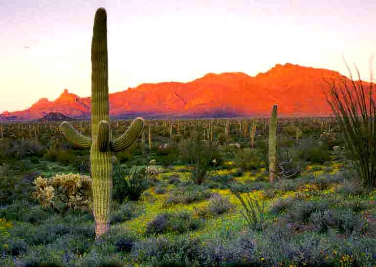 Arizona Sonoran Desert Museum 769x547