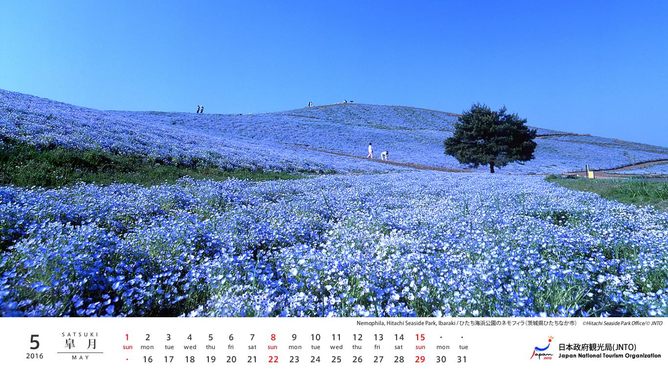 2016 Desktop Calendar Japan in Bloom 1366x768