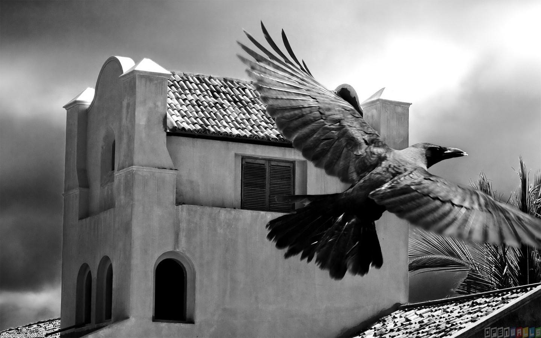 Black raven wallpaper 11992   Open Walls 1440x900