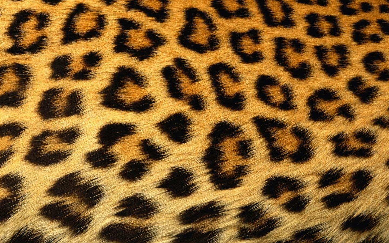 Leopard Print Desktop Wallpapers 1440x900