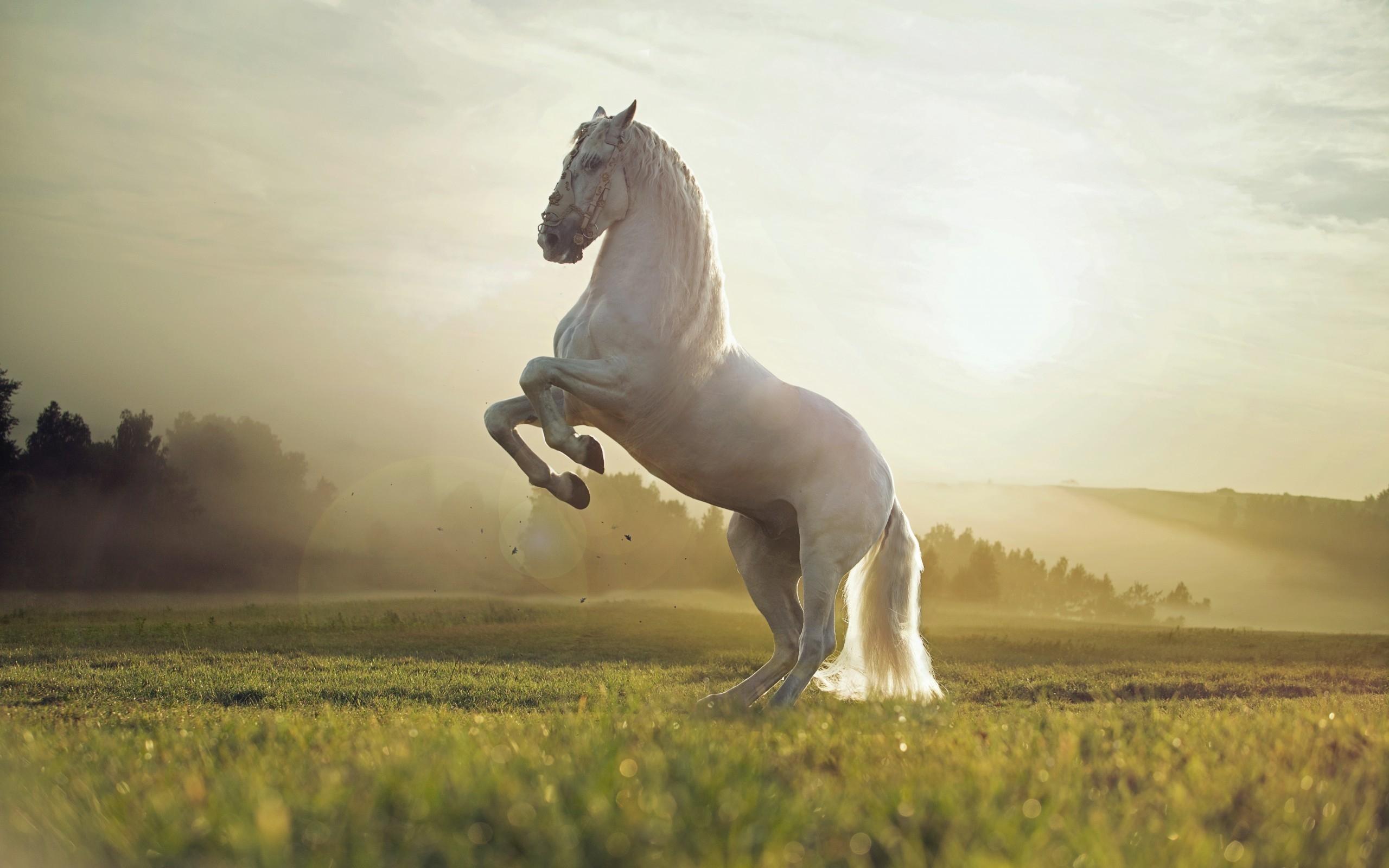 Wallpaper HD Beautiful White Horse   HD Wallpaper Expert 2560x1600