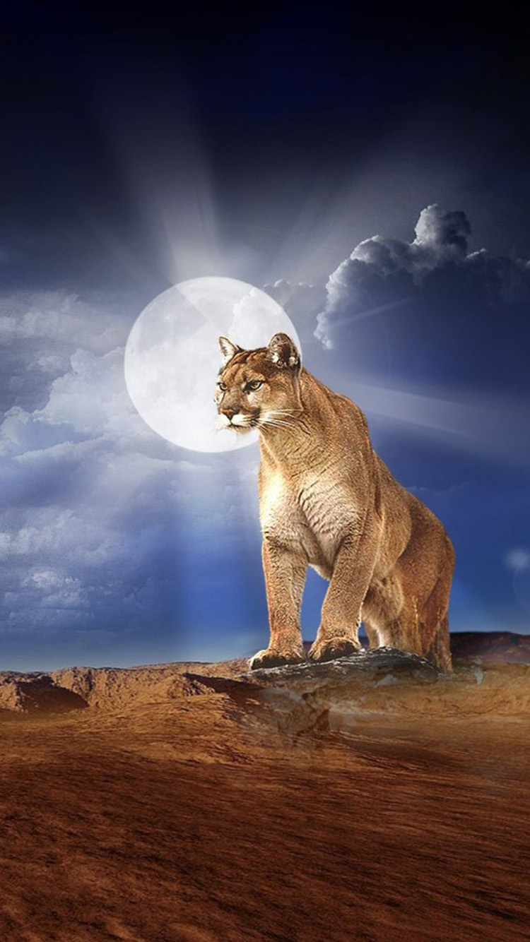 Lion Photo Iphone 6 Wallpaper 750x1334