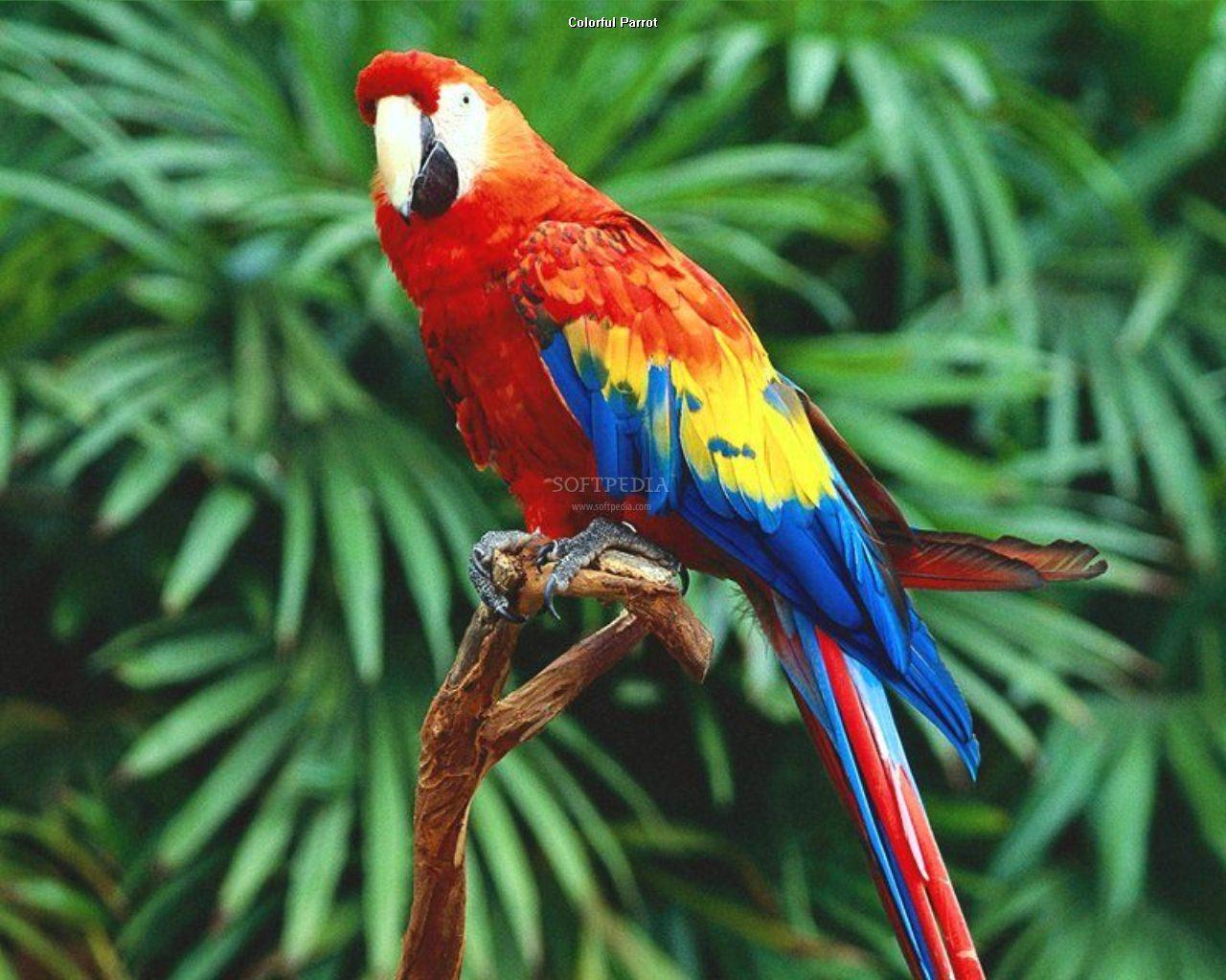 pictures top ten beautiful birds top 10 parrot wallpaper parrot 1280x1024