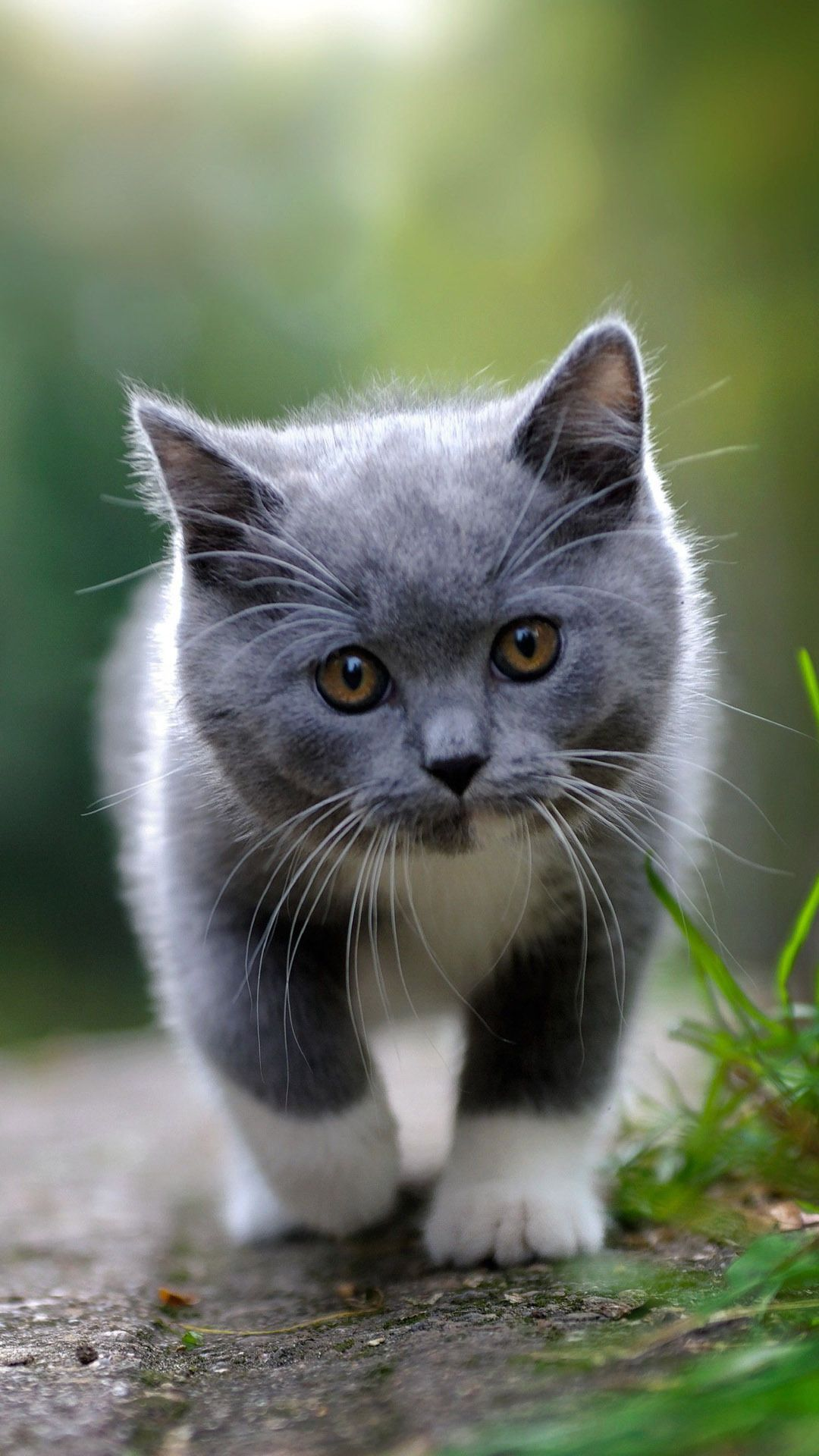 Cute grey kitten Cute Animals iPhone Wallpapers   mobile9 1080x1920