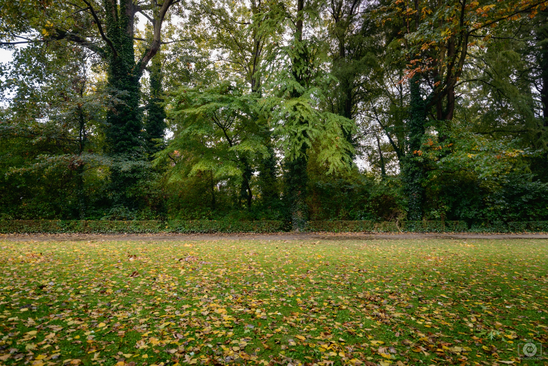 Autumn Park Background   High quality Backgrounds 1920x1281