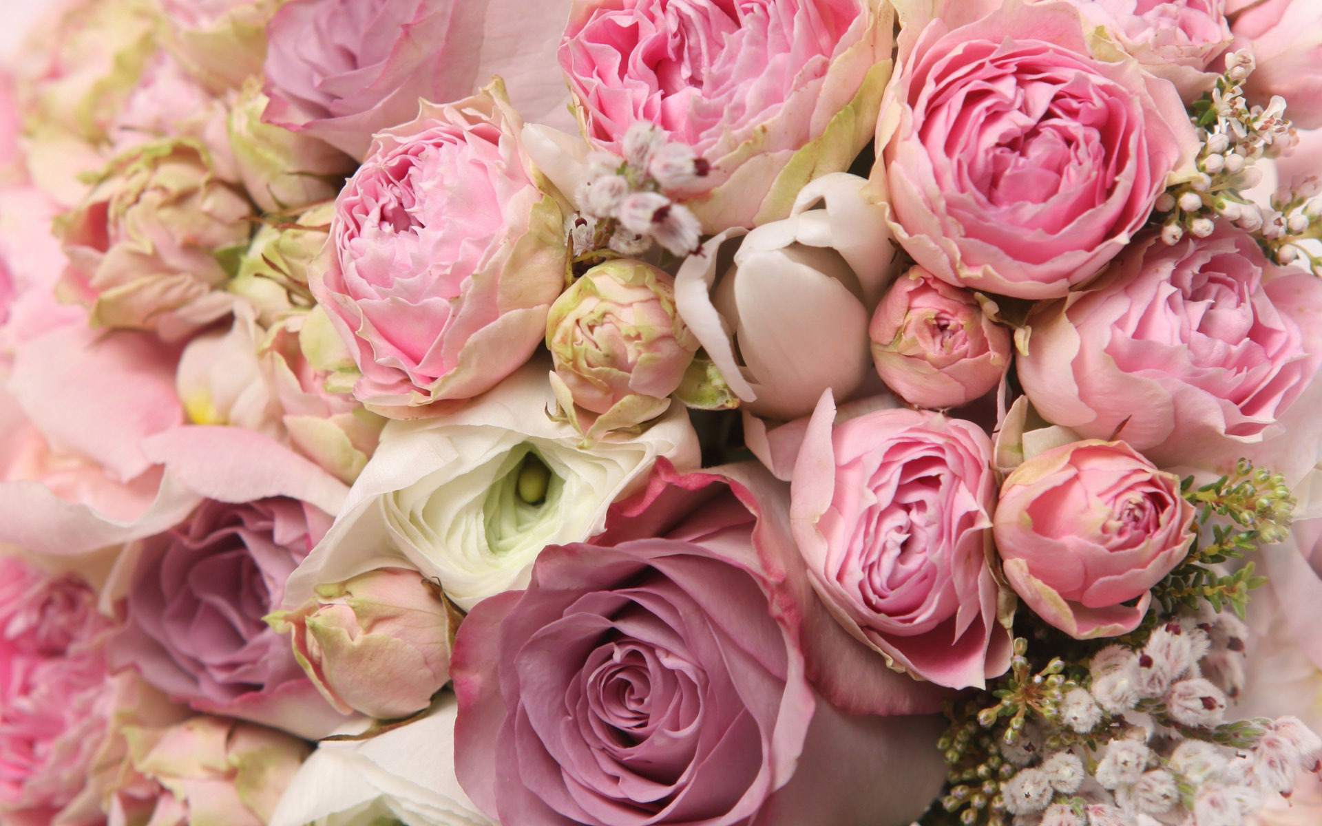 roses and peonies bouquet wallpaper 1206743