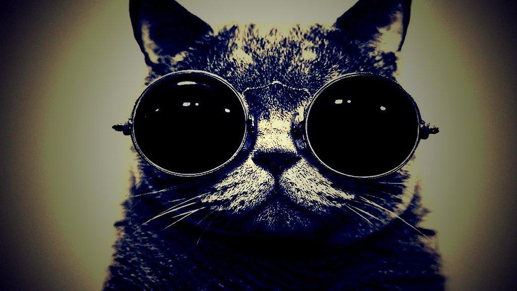 Animal Cat BAMF Cat with Sunglasses Lomo HD Wallpaper 1024x576