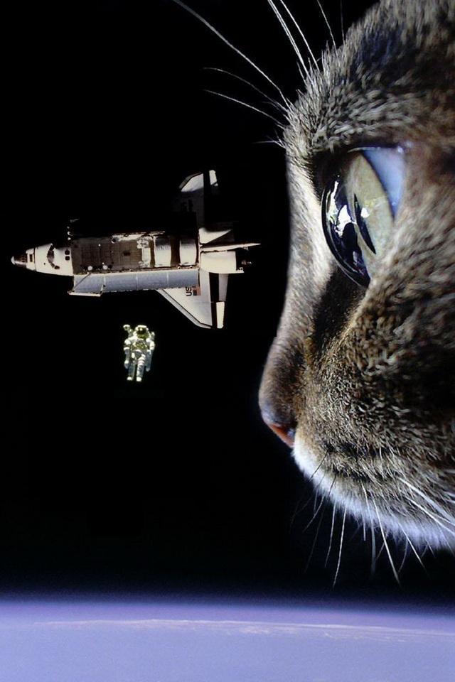 47 space cat wallpaper iphone on wallpapersafari - Space kitty wallpaper ...