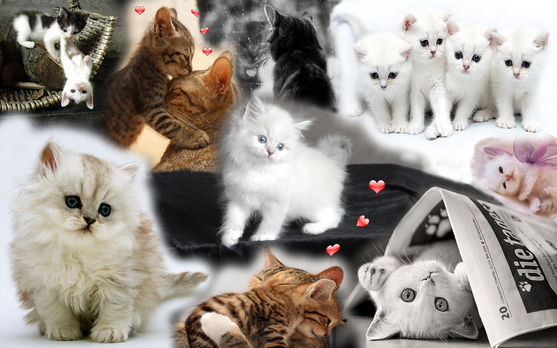 Cute Kitten   Cute Kittens Wallpaper 18854333 1920x1200