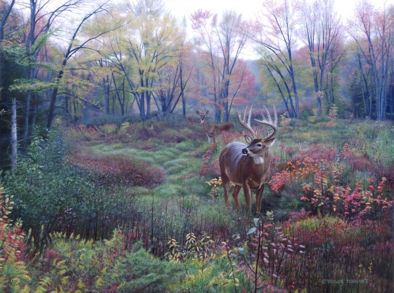 Whitetail Deer Backgrounds 1271x946