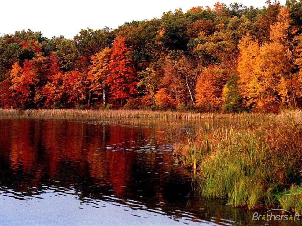 desktop wallpaper fall foliage   wwwwallpapers in hdcom 1024x768