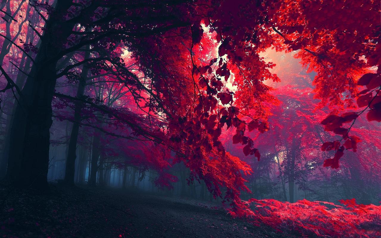 Pretty Wallpapers Tumblr Hd 1280x800
