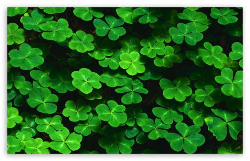 wallpapers black wallpapers wallpaper pictures backgrounds Clover 510x330