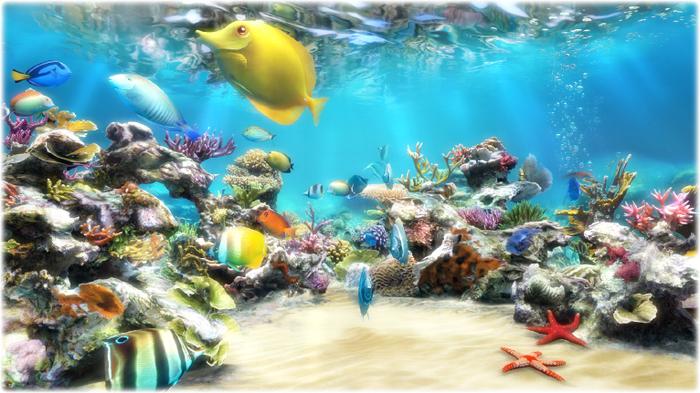 Clownfish Aquarium Live Wallpaper 700x393