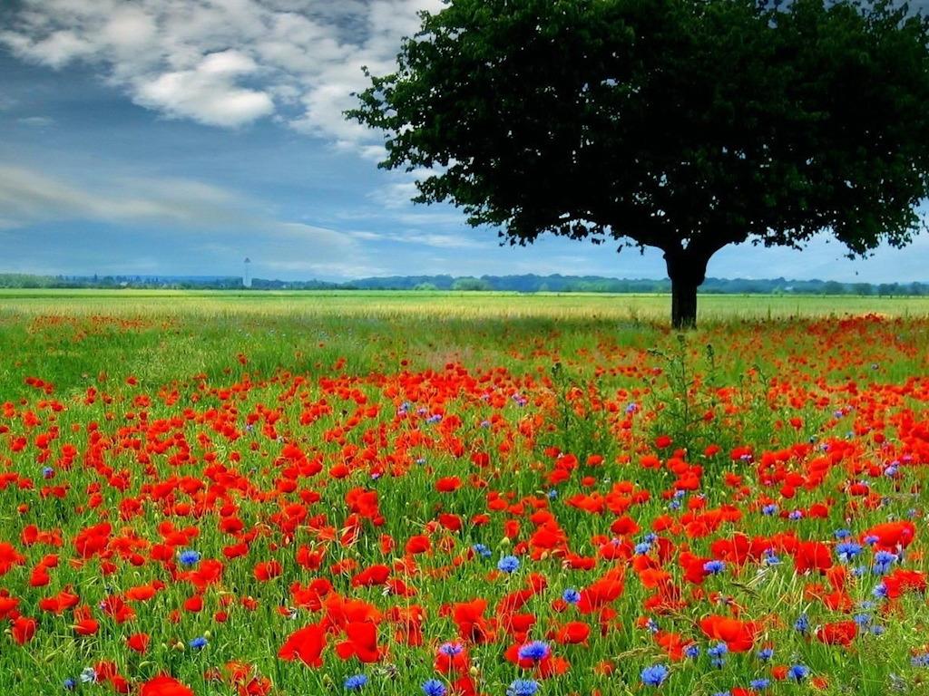 Download Rose Garden HD Wallpaper 1753 Full Size 1024x768